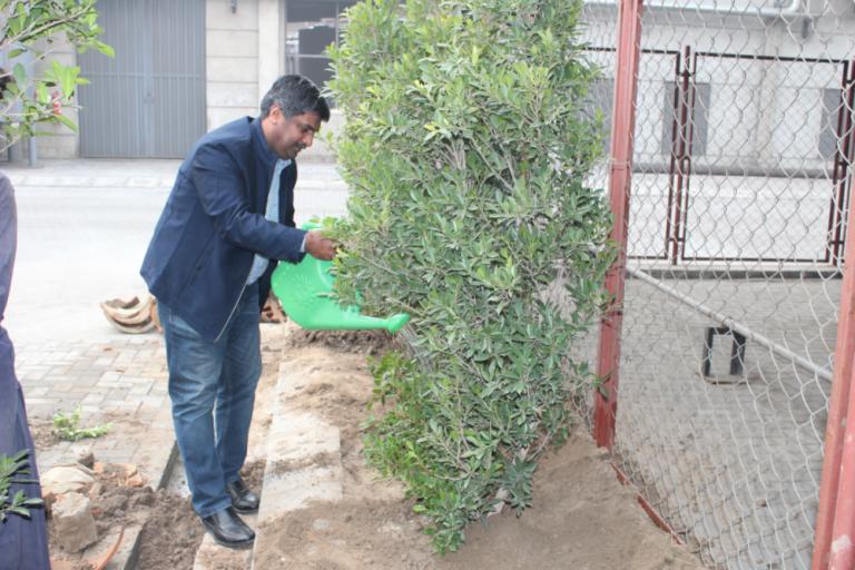 Plantation Activity